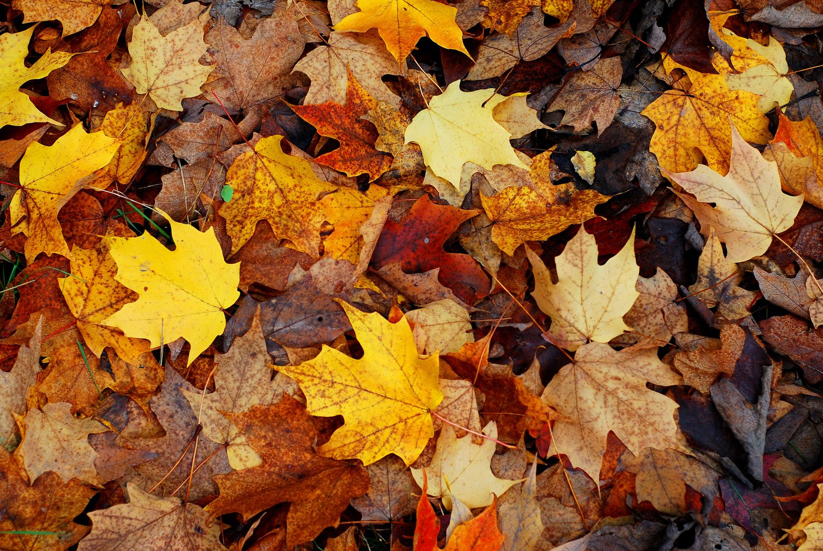 otoño bañohome
